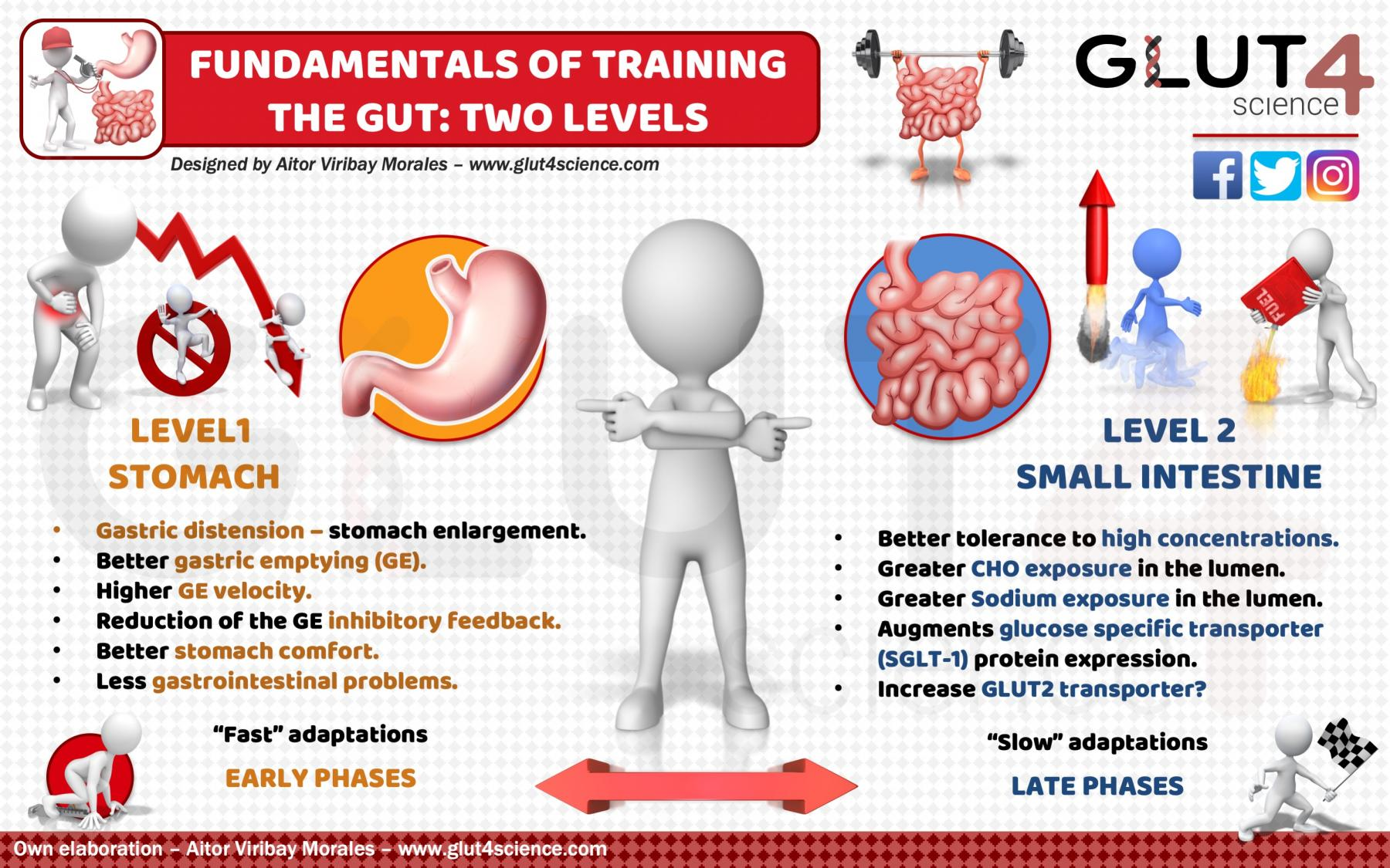 Training the gut athletes: Stomach and intestine
