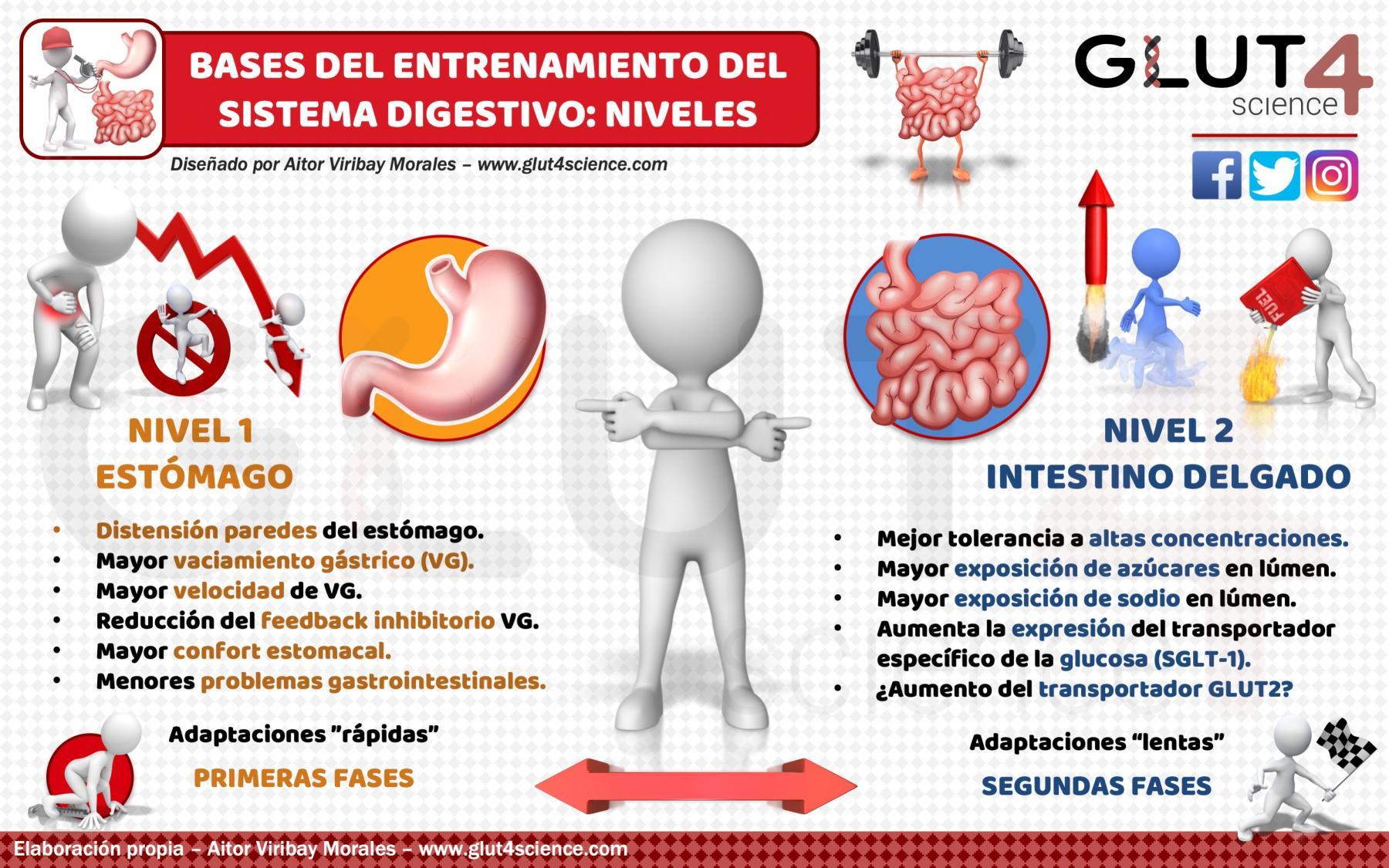 Entrenamiento Sistema Digestivo: Estomago e Intestino
