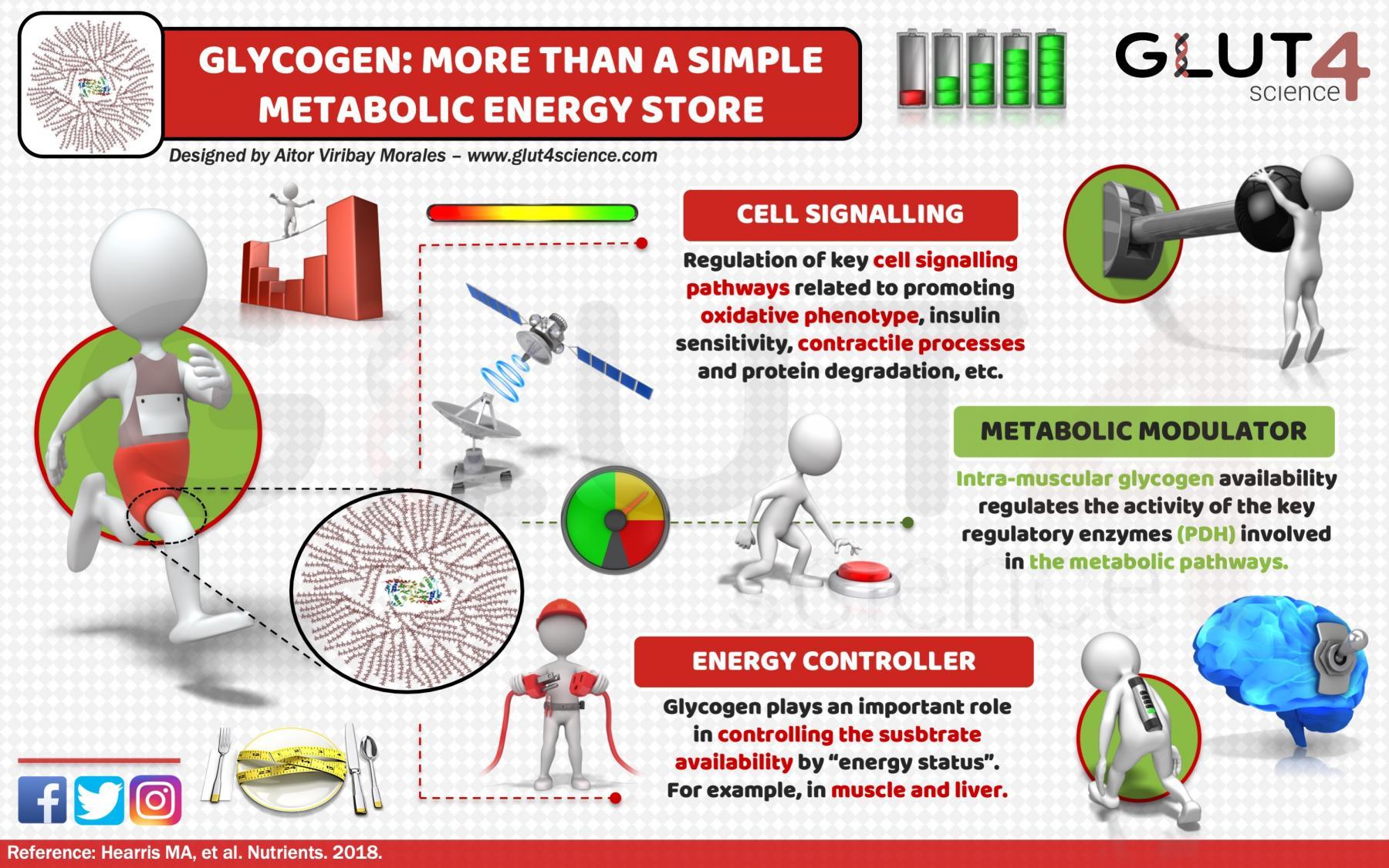 Glygocen: more than energy store?