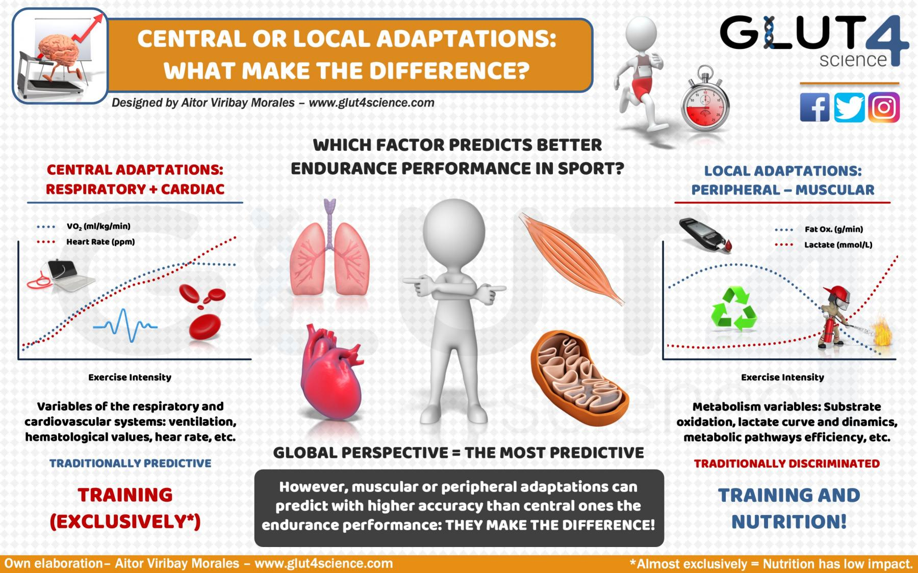 Central or Peripheral adaptations: What make the difference?