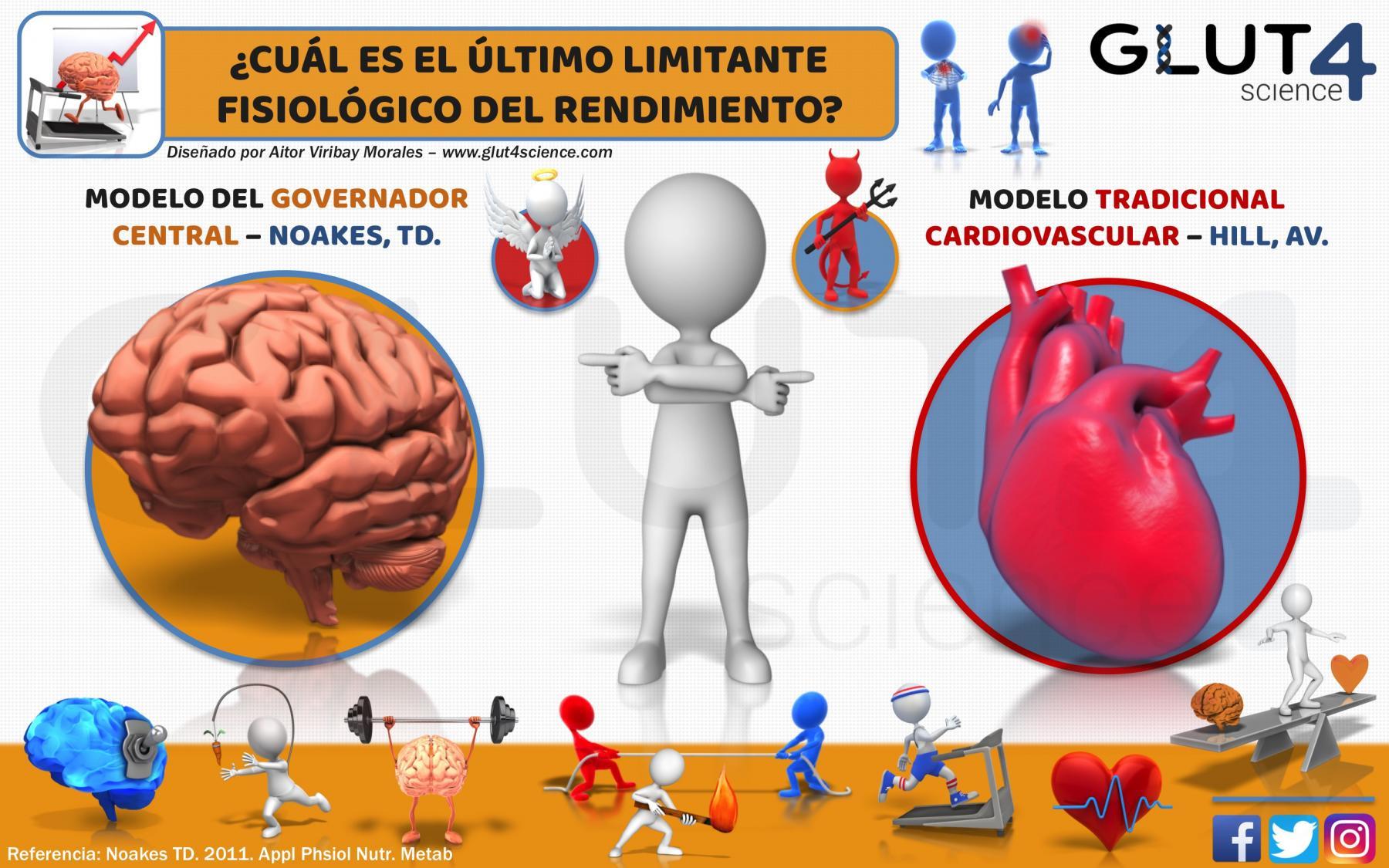 Cerebro VS Corazón Fisiología Ejercicio