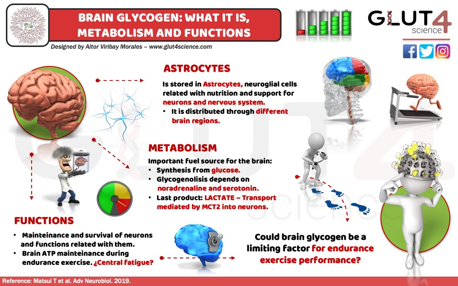Brain Glycogen in Astrocytes