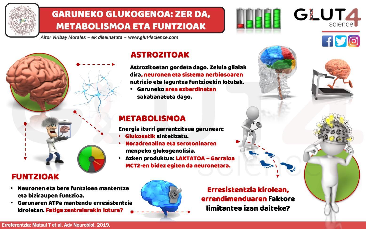 Glukogenoa Garunean eta funtzioak