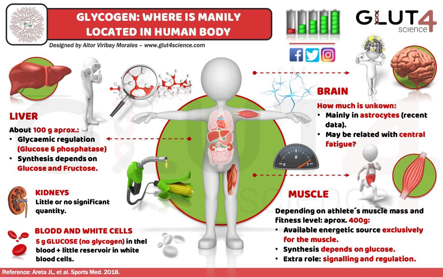 Glycogen in Human Body