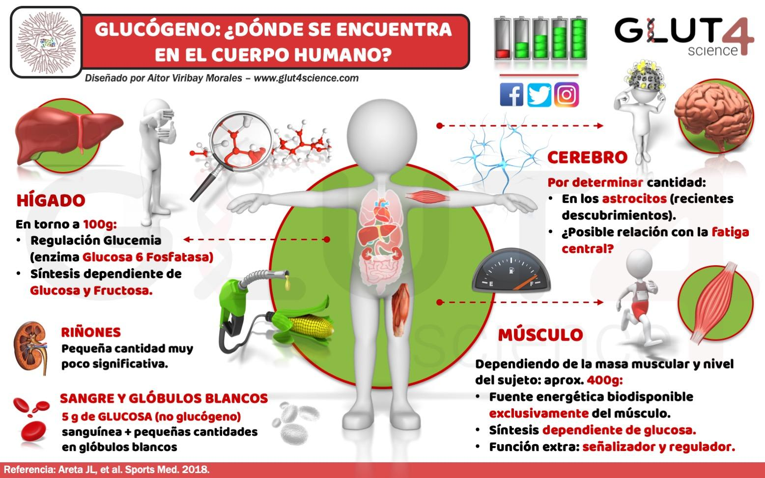 Glucógeno en el Cuerpo Humano