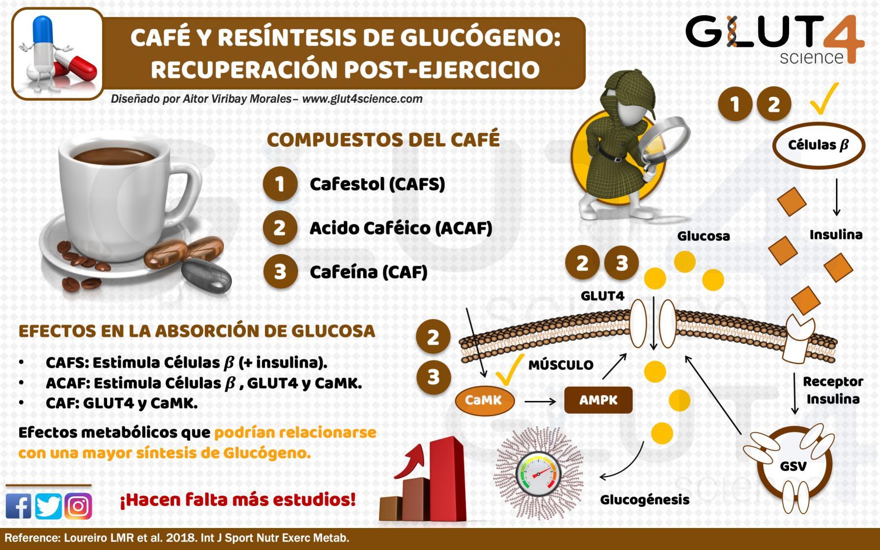 Café y Resíntesis de Glucógeno