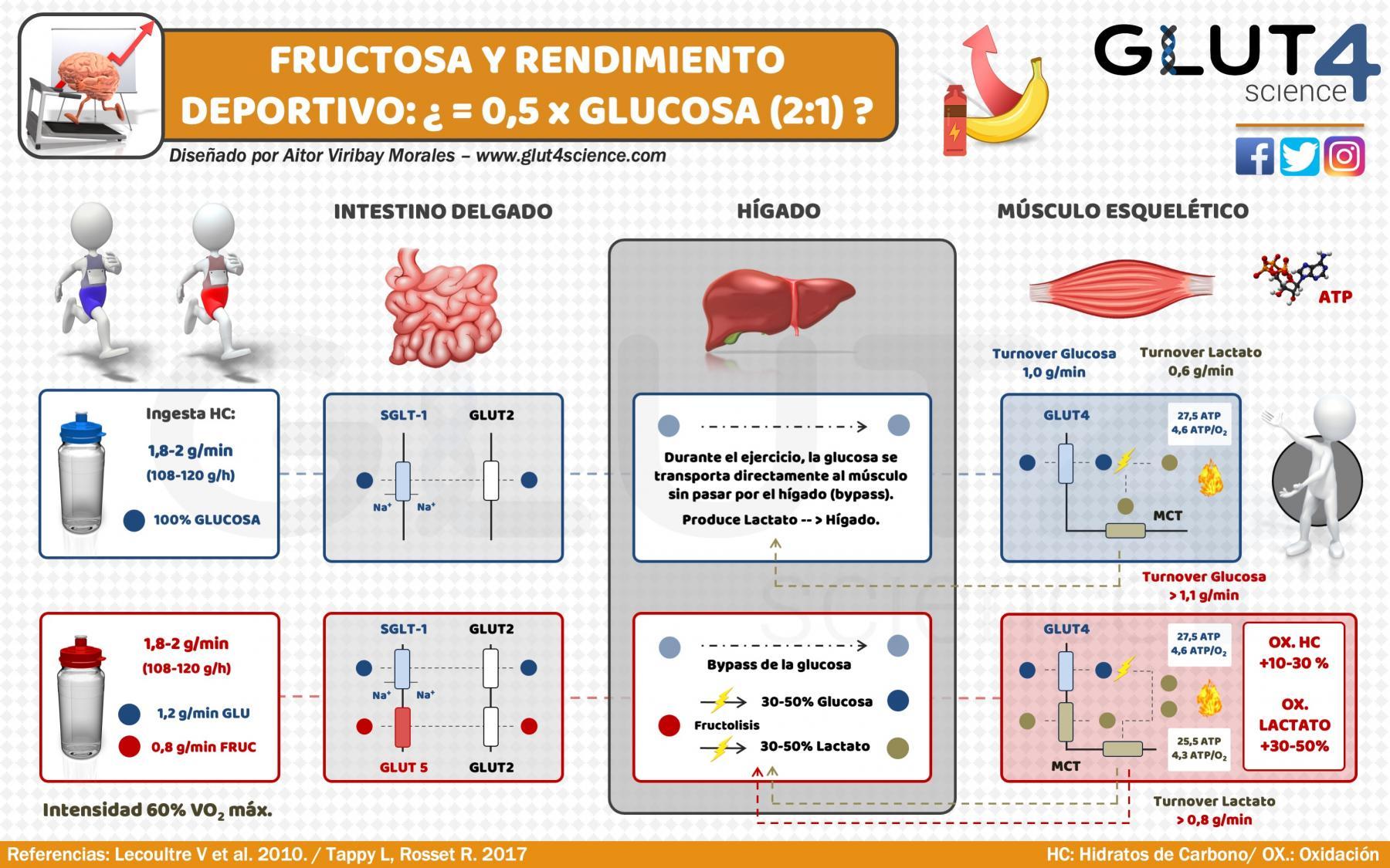 Fructosa y rendimiento deportivo: Más que 0,5 x glucosa (ratio 2:1)