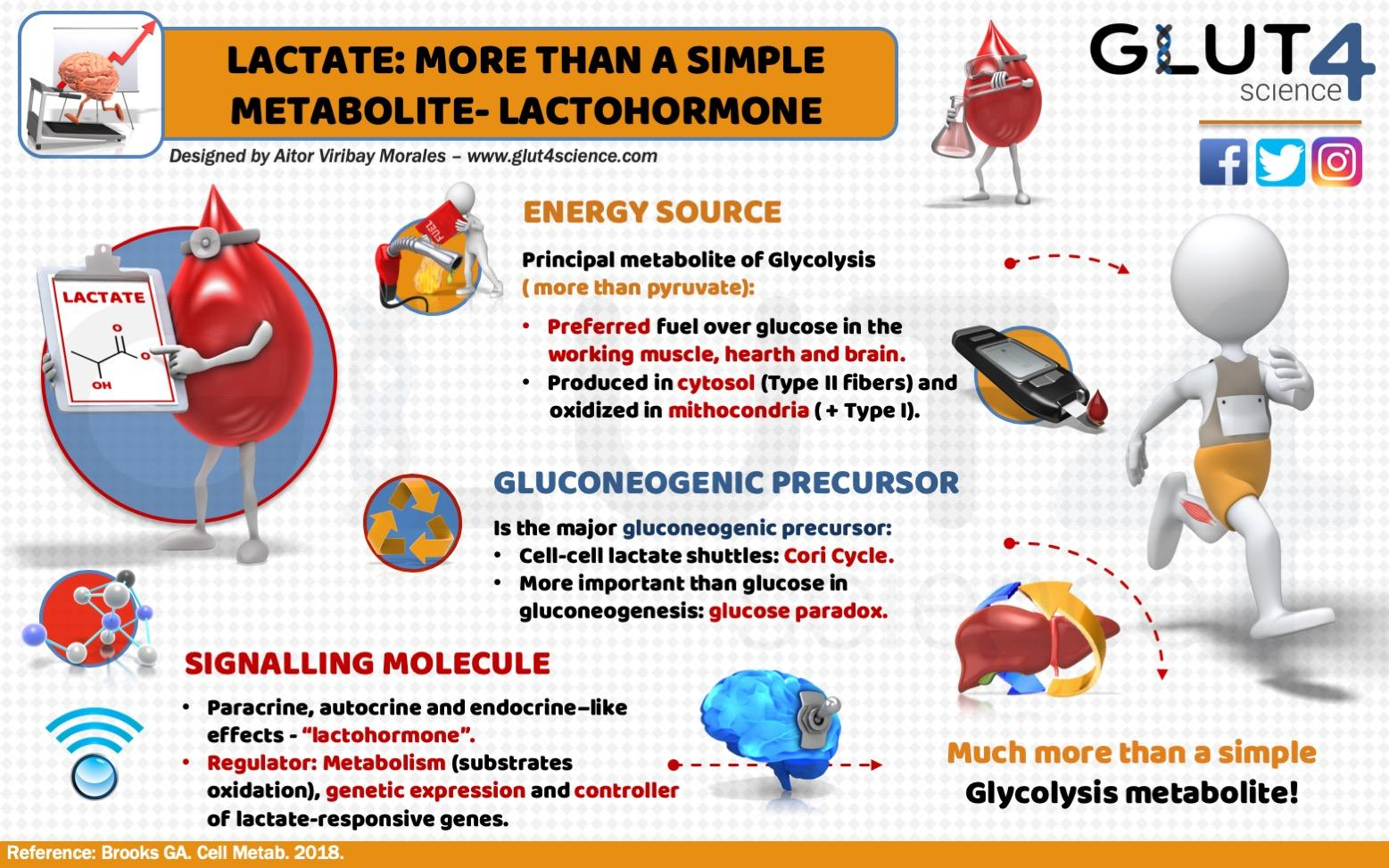 Lactate: More than a simple glycolysis metabolite - lactohormone