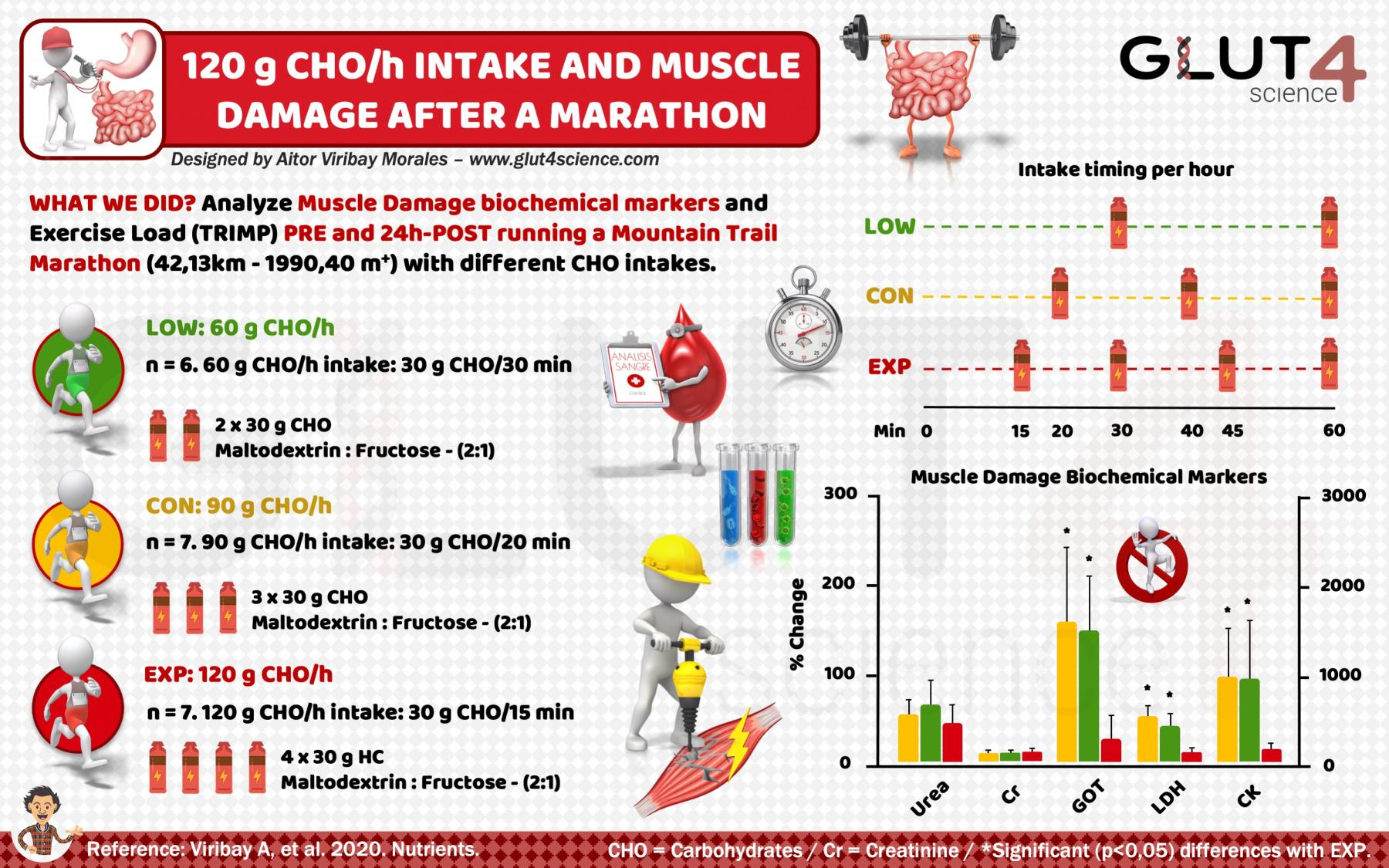 Intake of 120 grams per hour of Carbohydrates and muscle damage after a marathon - Viribay A - Glut4science.