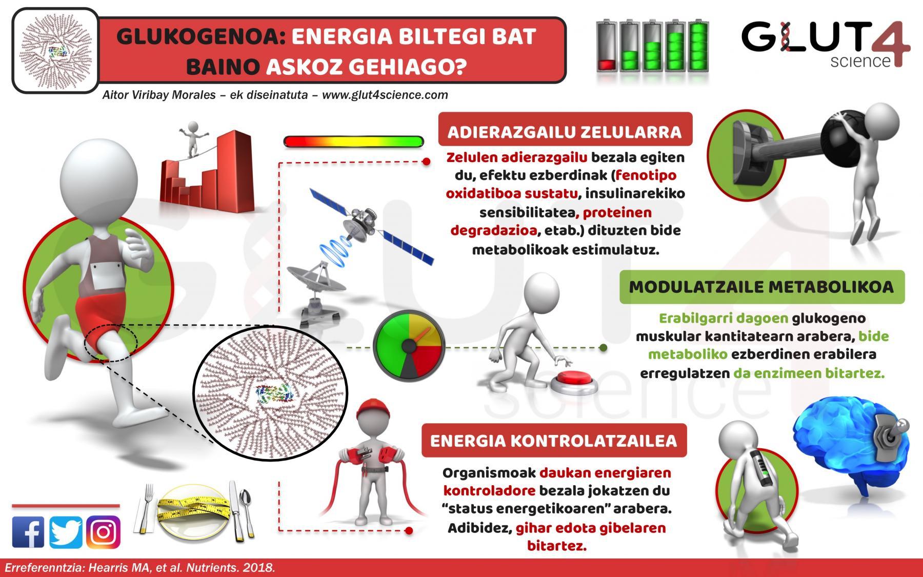 Glukogenoa: Energia biltegi bat baino gehiago?