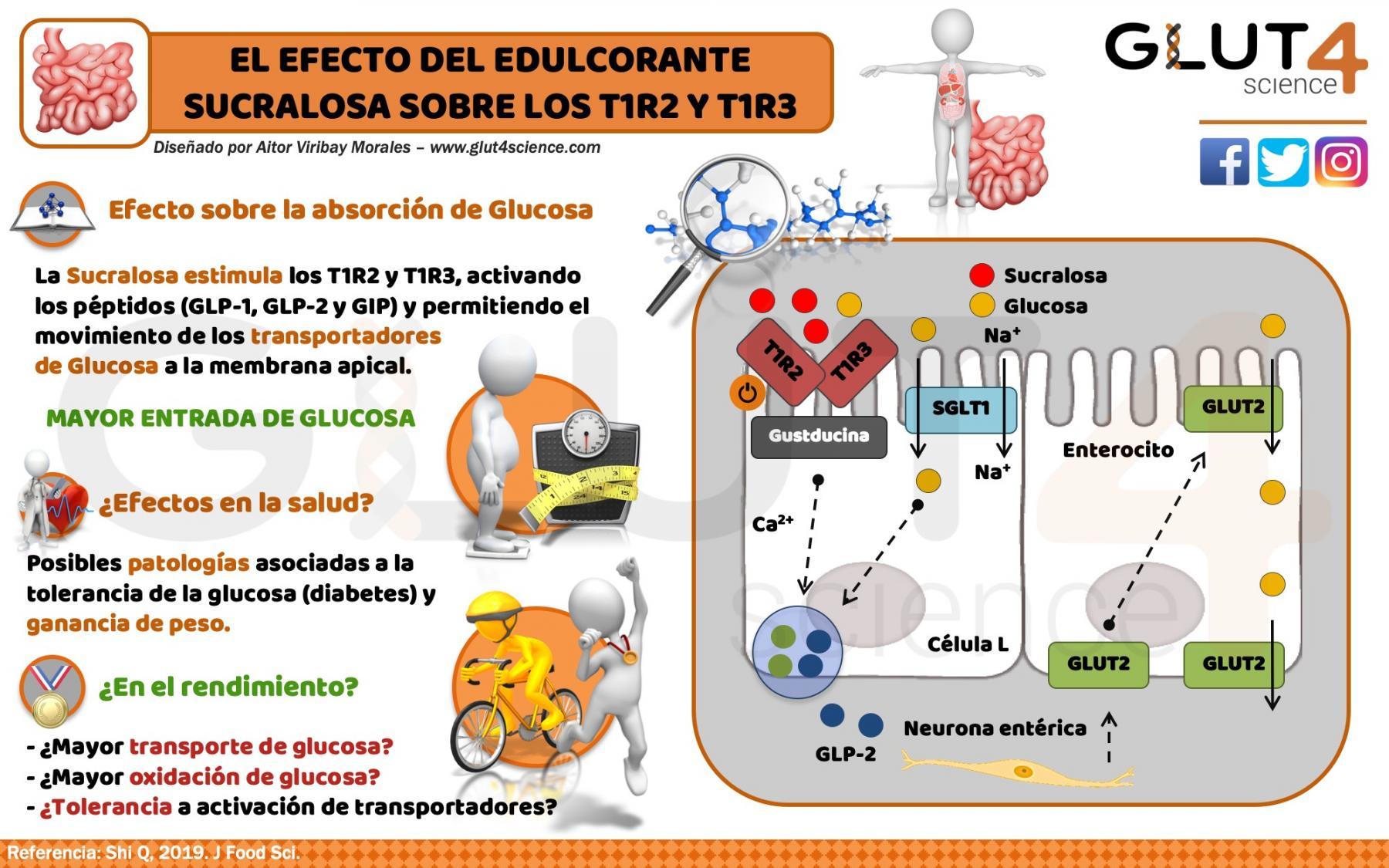 Efecto del Edulcorante Sucralosa en la absorción de glucosa