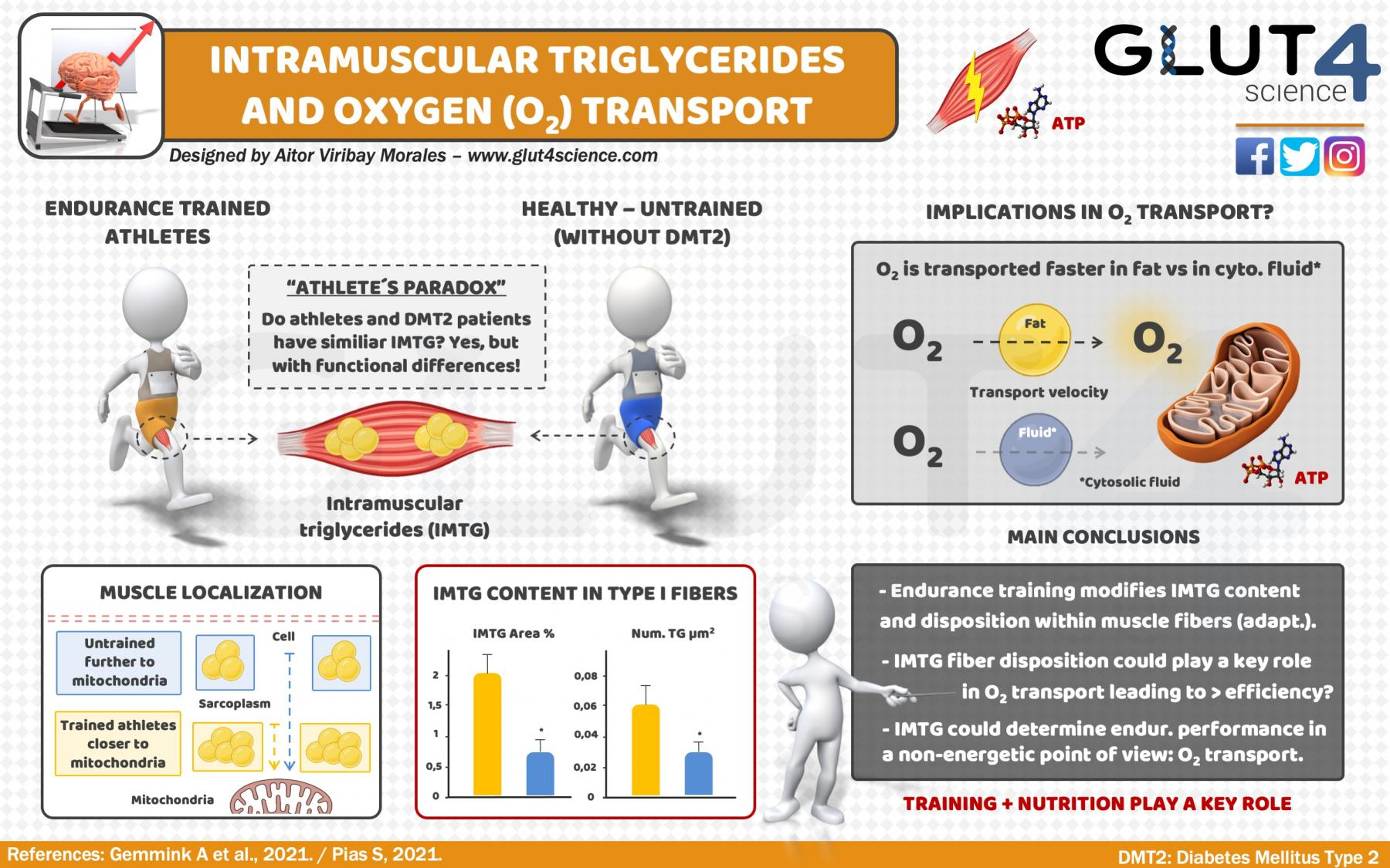 Intramuscular triglycerides, oxygen transport and efficiency